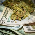 Even With $1.5 Billion in Cash, This Pot Stock Isn't a Buy